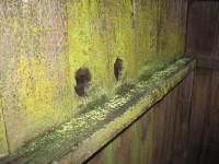 fence-and-lichens