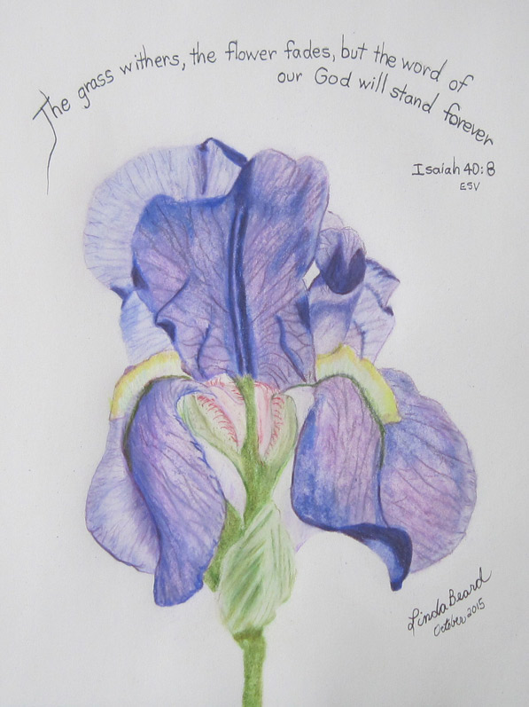 20151001-LB-iris-drwng