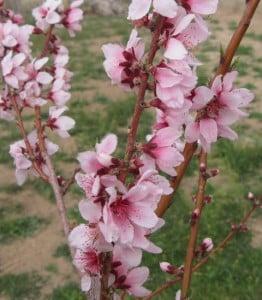 desert-2-flower